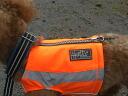 Finland dog brand Polar Vest (ポーラベスト) medium dog size