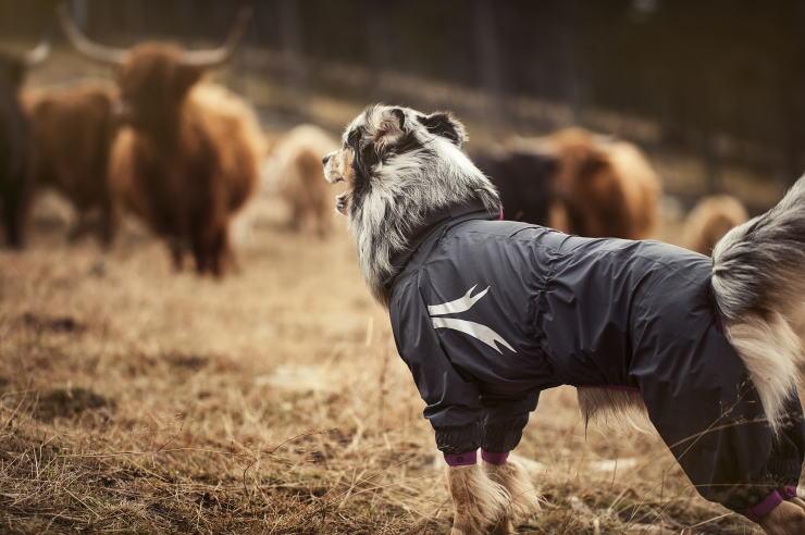 Slush Dog Large