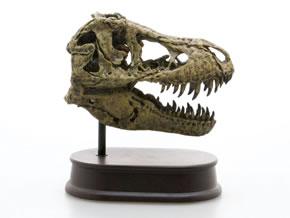 スカルジョーズモデル ティラノサウルス右向き