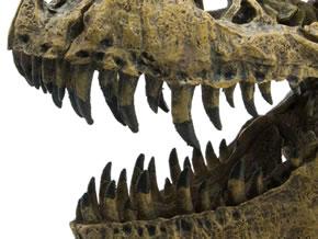スカルジョーズ ティラノサウルス 歯のアップ