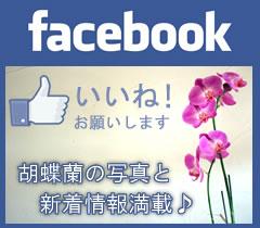 face book胡蝶蘭の愛華園芸