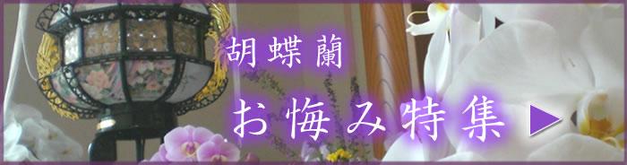 胡蝶蘭 お悔み特集