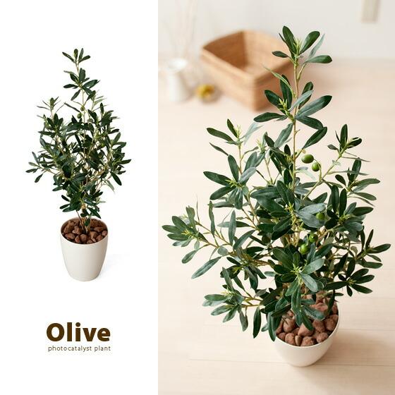 光触媒人工植物Oliveオリブグリン