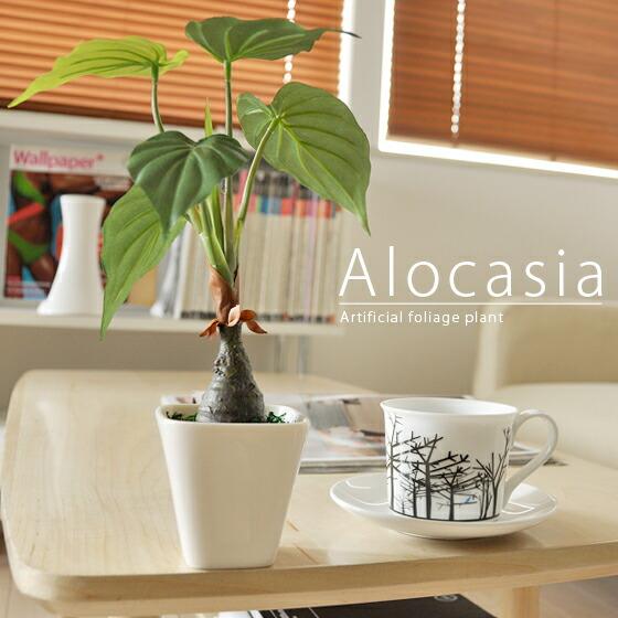 光触媒人工観葉植物アロカシア