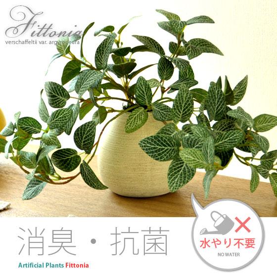 光触媒人工観葉植物Fittoniaフィットニア