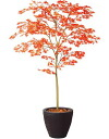 / (photocatalyst, CT catalytic processing) with Acer palmatum RED / H150 size / standard bowl