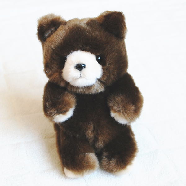 森林动物毛绒的熊