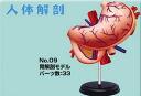 Toy-ipn-0769