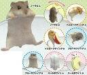 PUTITTO Hamster 12Pack BOX(Released)(PUTITTOハムスター 12個入りBOX)
