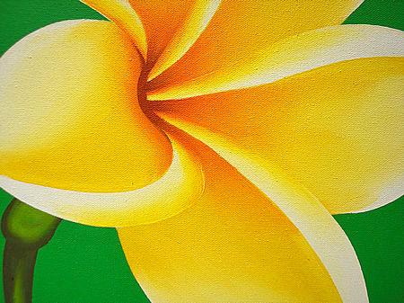 油彩5片花瓣矢量图