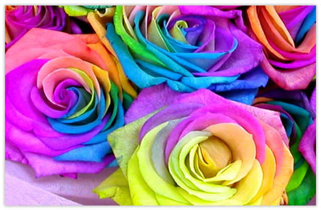 虹色の薔薇レインボーローズ