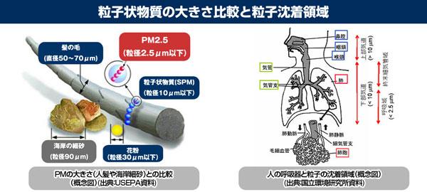 粒子状物質と花粉、PM2.5の大きさの比較、および人体への粒子沈着領域