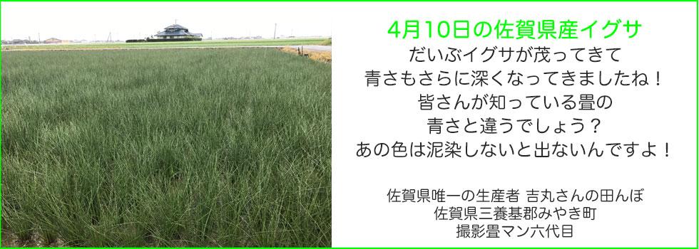 3月のい草