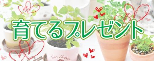 育てるハーブ 観葉植物