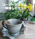 A piece of thing! Card free service with coffee cup and small vase set photograph of the freehand drawing♪