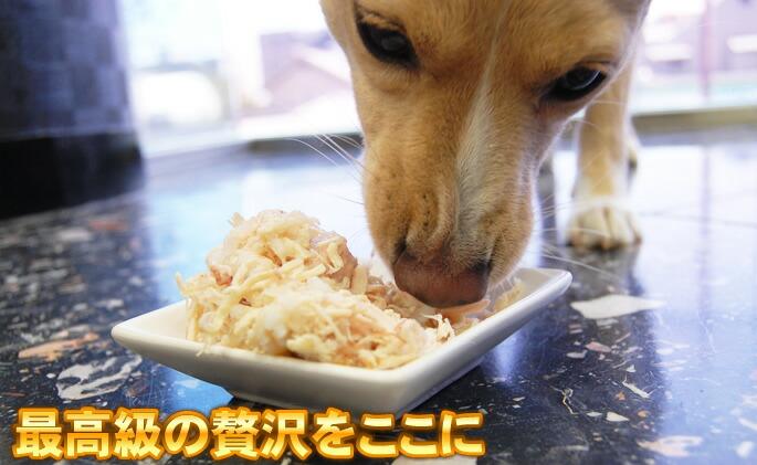 Schesir(シシア)/ドッグ