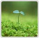 社会福祉と地球環境