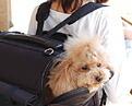 ■送料無料■ペット用キャリーバッグ 小型犬用:〜8kg【S型】