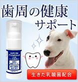 歯周の健康サポート