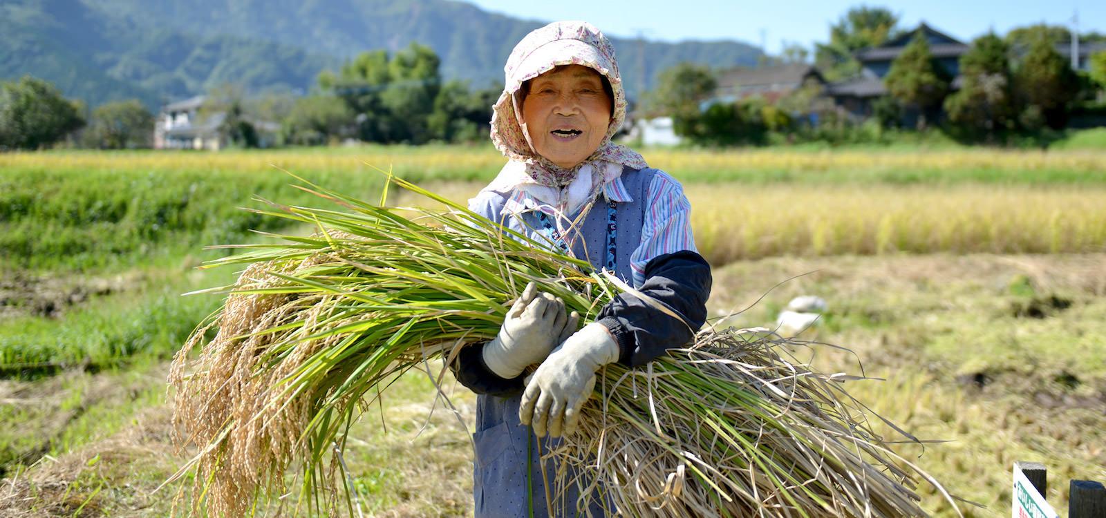 28年度産 後藤松子さんのお米