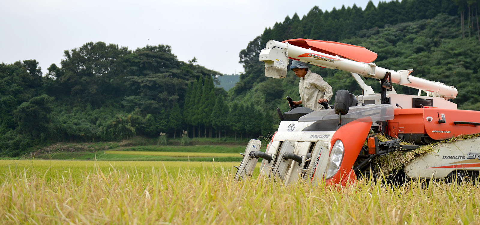 28年度産 高島和子さんのお米