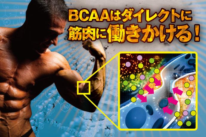 BCAAは、ダイレクトに筋肉に働きかける!