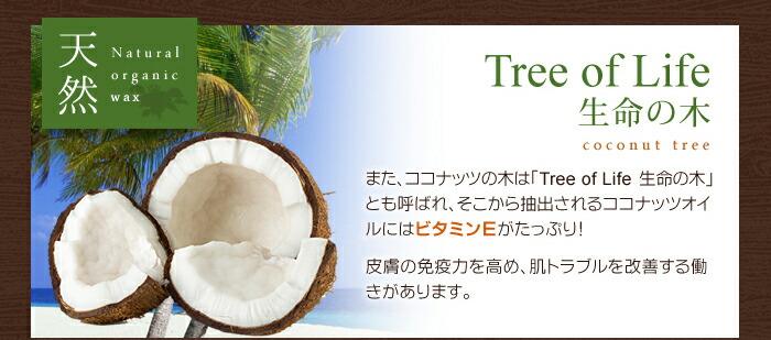 ココナッツは生命の木とも言われ、ビタミンEが豊富で肌に優しい