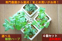 High-quality herbs directly from warehouse King fresh herbs deals series professional farmers! Pick your favorite herbs 4 species. 3,980 Yen! Interior / ornamental plants and gift food / kitchen / anniversary