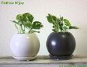 ポトス 감상/완벽 일주 상품 2 세트/관상 식물