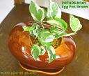 포트스엔죠이/브라운 에그/관엽식물