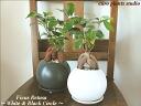 /용/영혼의 마음의 나무/화이트 & 블랙 서클 상품 2 세트/관 엽 식물