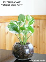 ポトス 감상/모던 라운드 글라스/하이드로 컬쳐/관 엽 식물