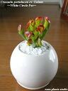 옥 공장/골 램 퍼펙트 서클 화이트 인테리어/화 초/다 육 식물/화분 선물/생일