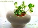 ポトス 감상/화이트 달걀/관 엽 식물
