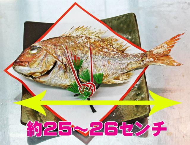 お食い初め鯛
