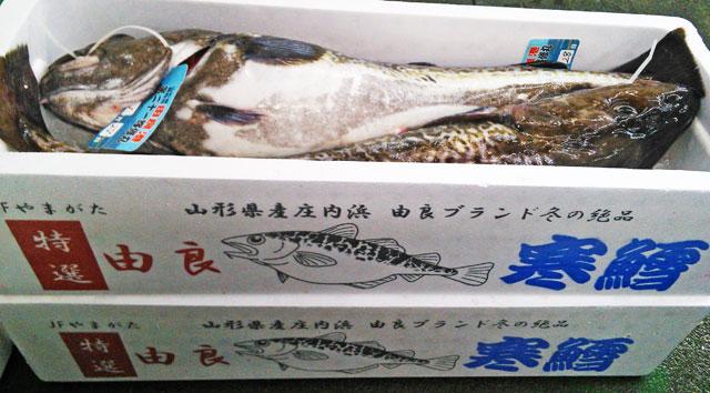 山形県庄内浜 寒鱈