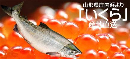 いくら 日本海は山形県庄内浜より産地直送