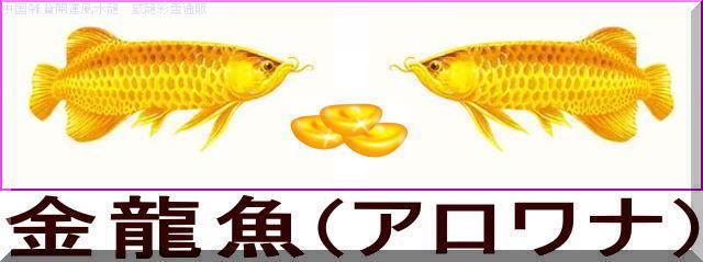 招財金龍魚(アロワナ)