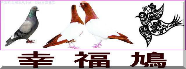 幸 福 鳩