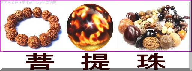 菩提珠(ボダイタマ)