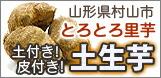 サトイモ・里芋・土生芋