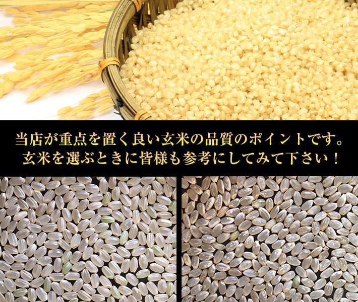 玄米での美味しいお米の見分け方