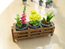 Wood stand for potted miniature gadgets flower / flower [SMWS001], m [-s] [restock]