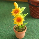 Waiting to restock ☆ ☆ miniature gadgets flower / flower mini sunflower plants