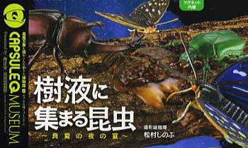 カプセルQミュージアム 樹液に集まる昆虫 真夏の夜の宴