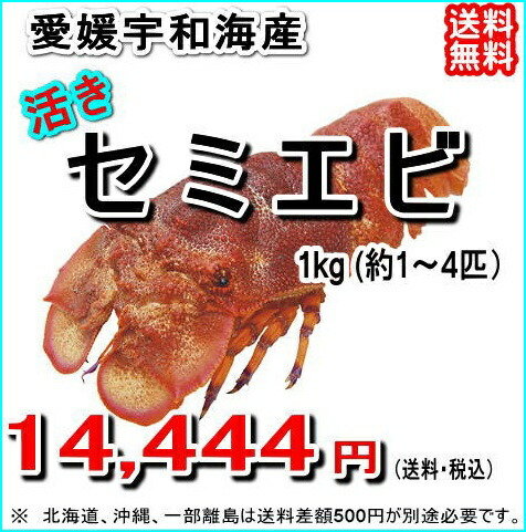 愛媛宇和海産 『セミエビ 1kg』【送料無料】