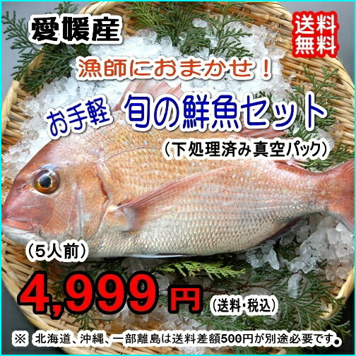 愛媛産 『 漁師におまかせ!お手軽鮮魚セット (5人前) 』【送料無料】