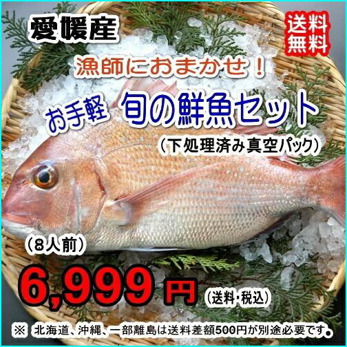 愛媛産 『 漁師におまかせ!お手軽鮮魚セット (8人前) 』【送料無料】