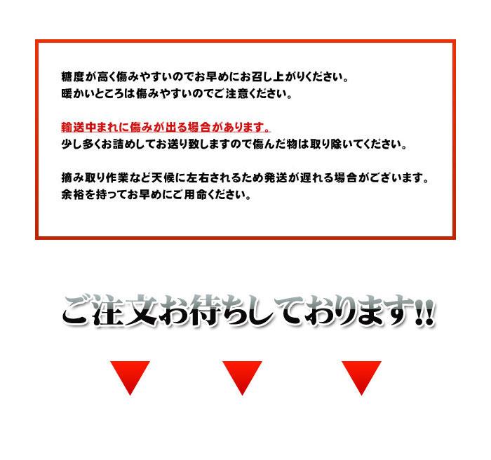 『 河内晩柑 』愛媛宇和島吉田産 みかん王国の贈り物