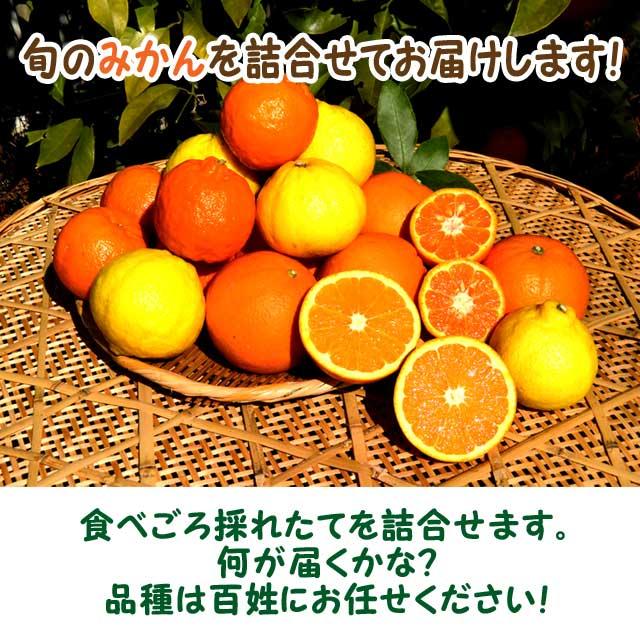愛媛 佐田岬 浅野農園産 訳あり  『 いろいろ柑橘詰合せ 』 5kg  【送料無料】